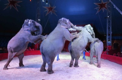 cirque medrano éléphants