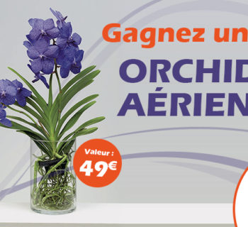 jeu_jardiland_orchidee_aerienne_2018
