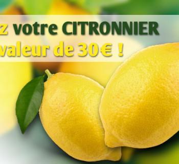 bloc_jeu_jardiland_citronnier