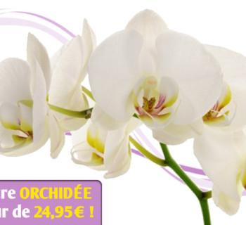 bloc_jeu_jardiland_orchidees_2