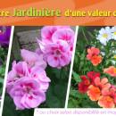 bloc_jeu_jardiland_jardinieres