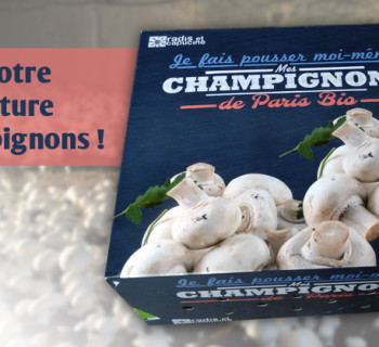 bloc_jeu_jardiland_serre_champignons