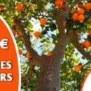 jardiland_arbres_fruitiers_100e