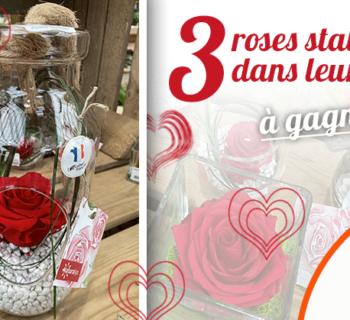 jardiland_roses_stabilisées_support